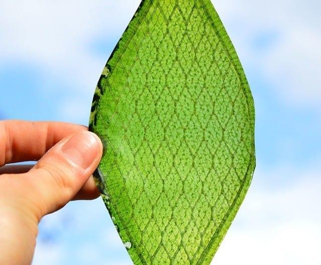 silk_leaf
