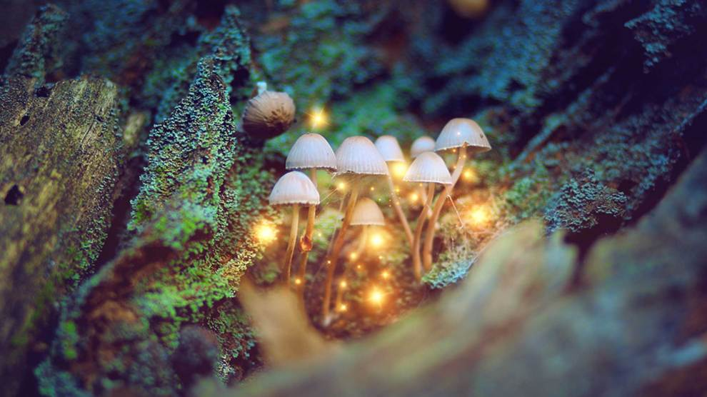 Michael Pollan | Can We All Benefit From Psychedelics?